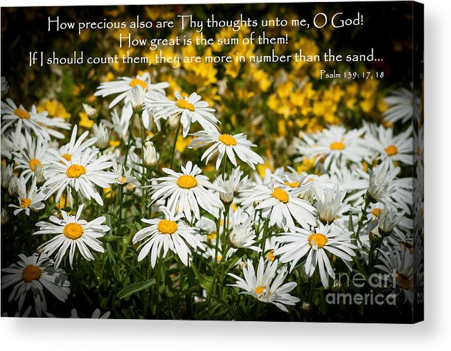 Daisy Acrylic Print featuring the photograph Psalm 139 by ArtissiMo Photography