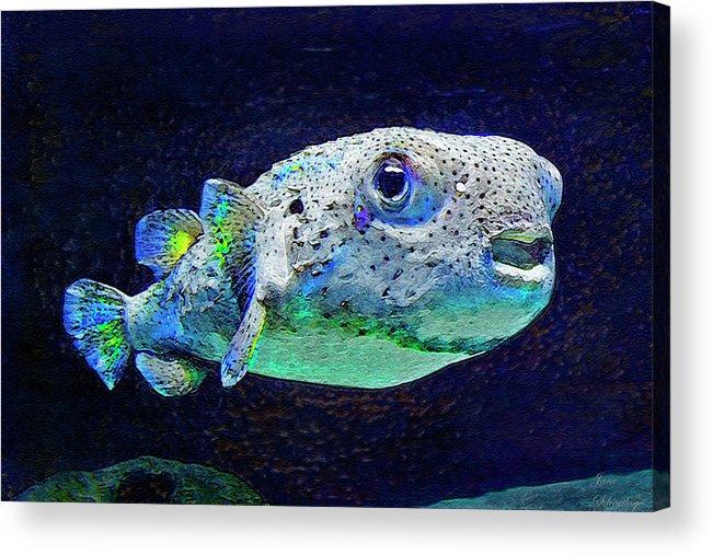 Puffer Fish Acrylic Print featuring the digital art Puffer Fish by Jane Schnetlage