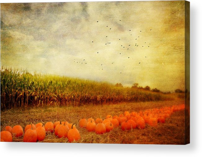 Pumpkins Acrylic Print featuring the photograph Pumpkins In The Corn Field by Kathy Jennings
