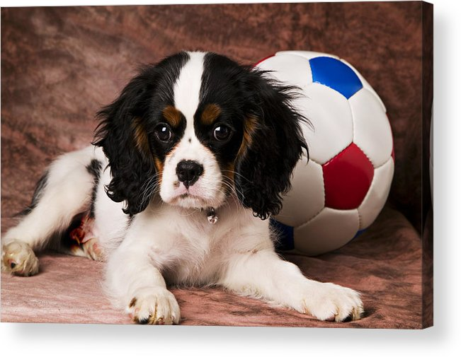 Puppy Dog Cute Doggy Domestic Pup Pet Pedigree Canine Creature Soccer Ball Acrylic Print featuring the photograph Puppy With Ball by Garry Gay