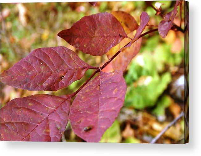 Fall Acrylic Print featuring the photograph Purple Leaf by Joni Strickfaden