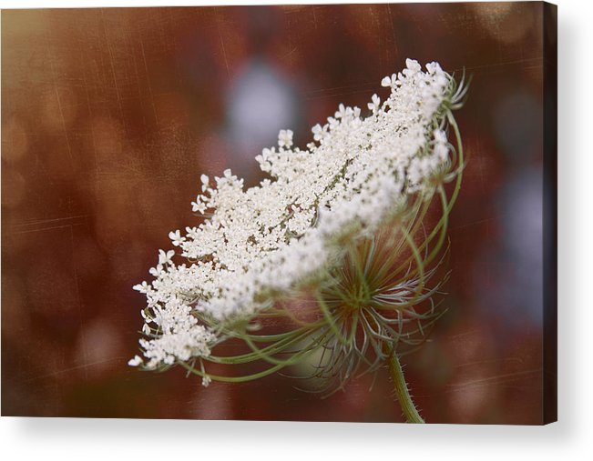 Queen Anne's Lace Acrylic Print featuring the digital art Queen Anne's Lace 3 by Gwen Vann-Horn