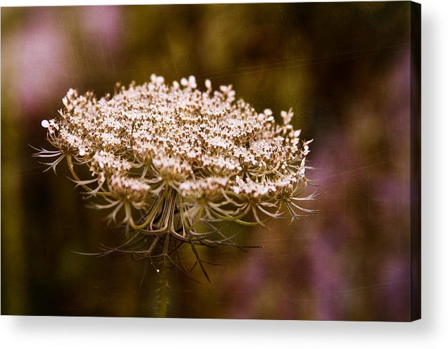 Queen Anne's Lace Acrylic Print featuring the digital art Queen Anne's Lace 4 by Gwen Vann-Horn
