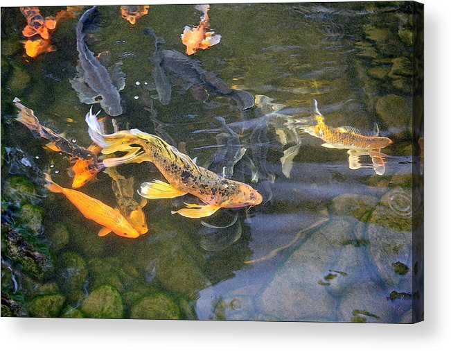 Digital Painting Acrylic Print featuring the painting Queen Of The Pond by Ron Morecraft