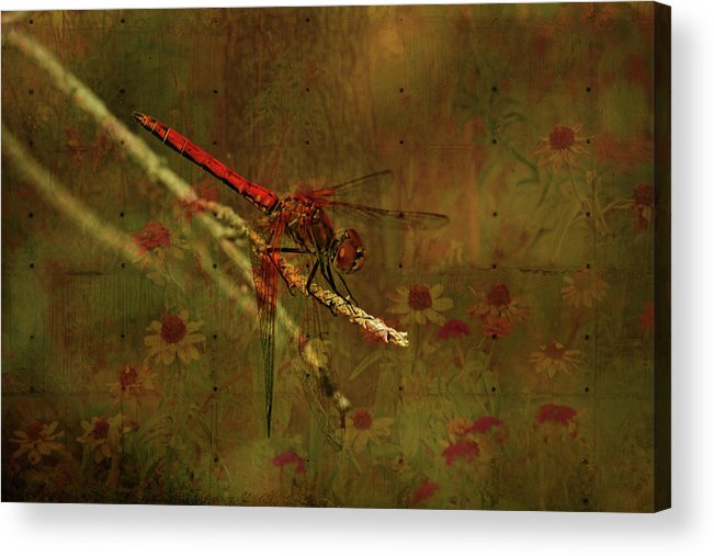 Red Dragonfly Acrylic Print featuring the photograph Red Dragonfly Dining by Bonnie Bruno