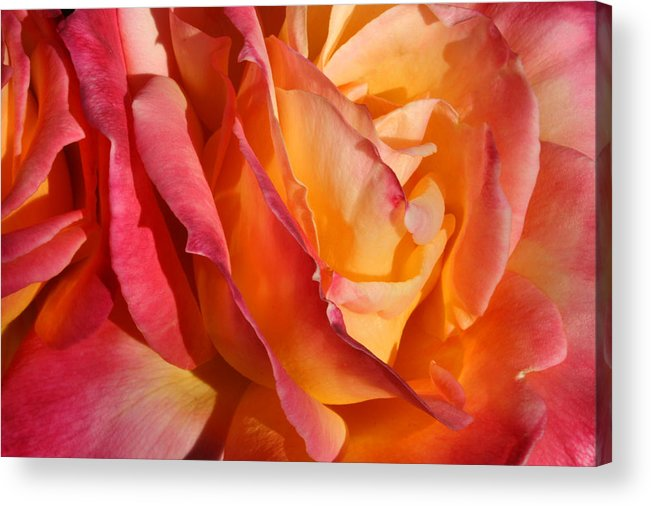 Flowers Acrylic Print featuring the photograph Red Orange Yellow by Ron Javorsky