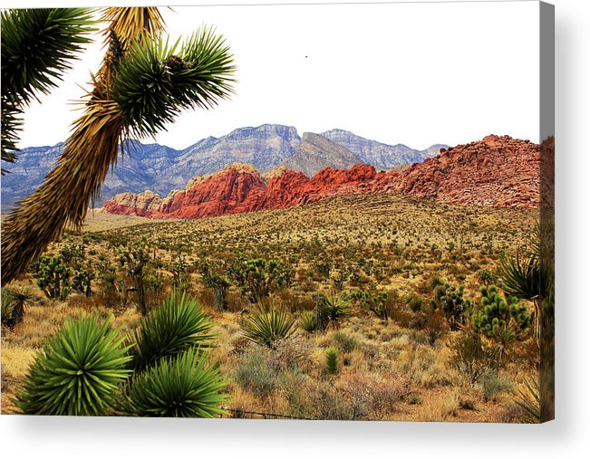 Canyons Acrylic Print featuring the photograph Red Rock Canyon by Paul Lamonica