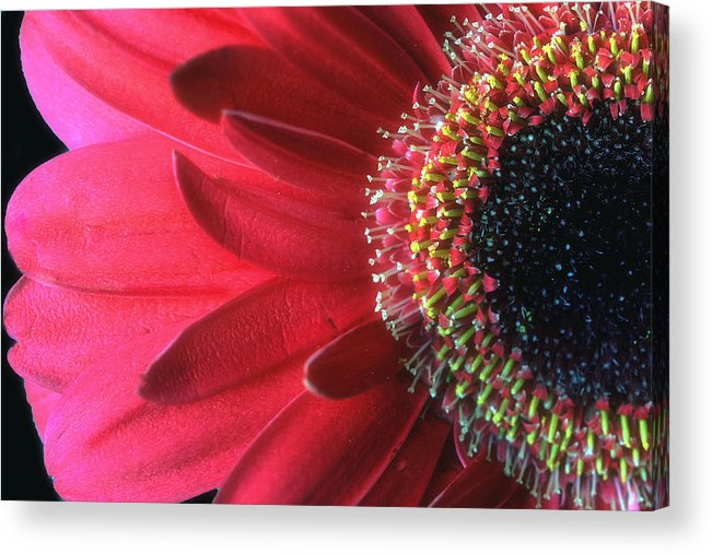 Red Acrylic Print featuring the photograph Red Sun by Gina Cormier