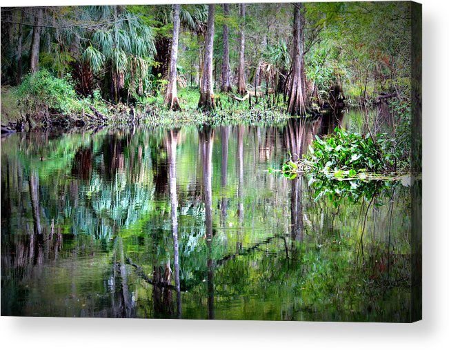 Florida Acrylic Print featuring the photograph Reflection Of Cypress Trees by Carol Groenen