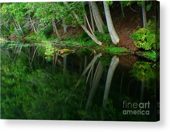 Forest Acrylic Print featuring the photograph Reflections Of A Forest by Idaho Scenic Images Linda Lantzy