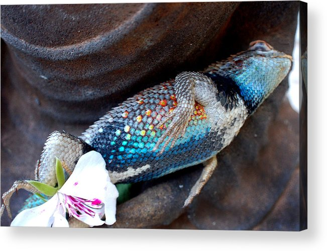 Stil Life Acrylic Print featuring the photograph Requiem For A Rainbow Lizard by Heather S Huston