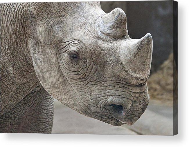 Rhinoceros Acrylic Print featuring the photograph Rhinoceros by Tom Mc Nemar