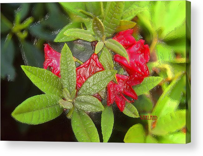 Rhodendron Acrylic Print featuring the mixed media Rhodendron In 3d by Garland Johnson