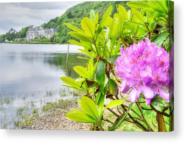 Kylemore Abbey Acrylic Print featuring the photograph Rhododendron On Lake Kylemore, Kylemore Abbey Galway by Deborah Squires
