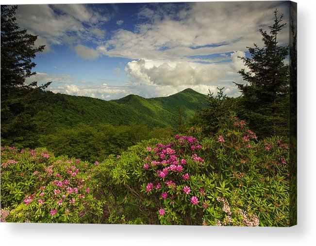 Blue Ridge Parkway Acrylic Print featuring the photograph Rhododendrons On The Blue Ridge Parkway by Reid Northrup