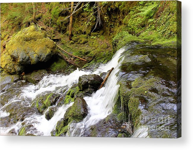Fundy Acrylic Print featuring the photograph River Waterfall by Samiksa Art