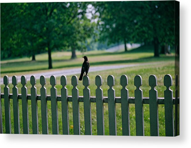 Bird Acrylic Print featuring the photograph Robin On A Fence by Lone Dakota Photography