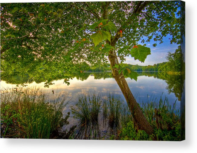 Nature Acrylic Print featuring the photograph Robinwood by Ches Black