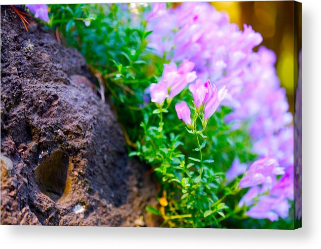 Floral Acrylic Print featuring the photograph Rock And Flowers by Paul Kloschinsky