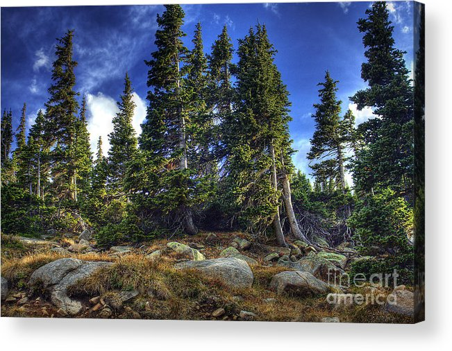 Nature Acrylic Print featuring the photograph Rock Garden by Pete Hellmann