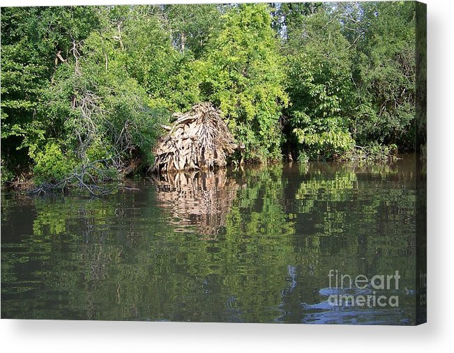 Tree Roots Acrylic Print featuring the photograph Roots In The Stream by Deborah MacQuarrie-Selib