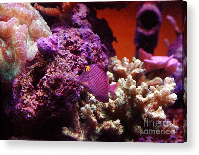 Clay Acrylic Print featuring the photograph Salt Water Aquarium by Clayton Bruster