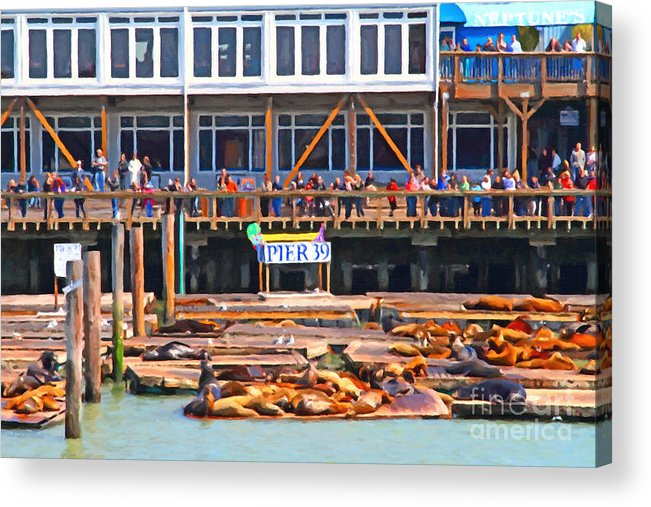 San Francisco Acrylic Print featuring the photograph San Francisco Pier 39 Sea Lions . 7d14272 by Wingsdomain Art and Photography
