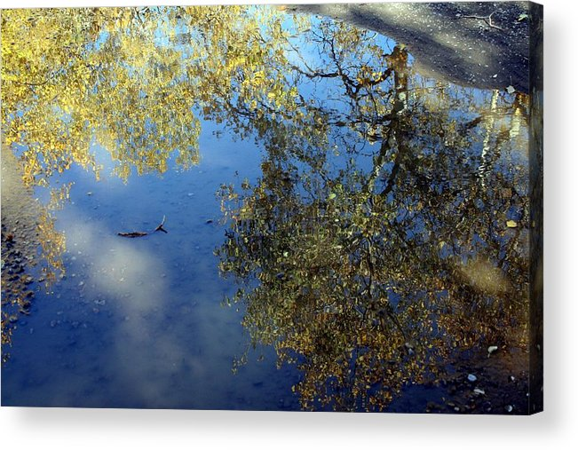 Reflections Acrylic Print featuring the photograph Scenes From A Mud Puddle by Tiffany Vest