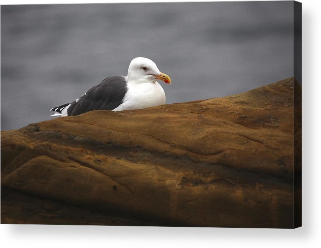 Acrylic Print featuring the photograph Sea Gull by Stephen Dennstedt
