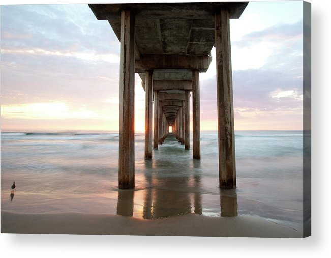 Seagull Acrylic Print featuring the photograph Sea Gull Watching At Scripps Pier by Michael Sangiolo
