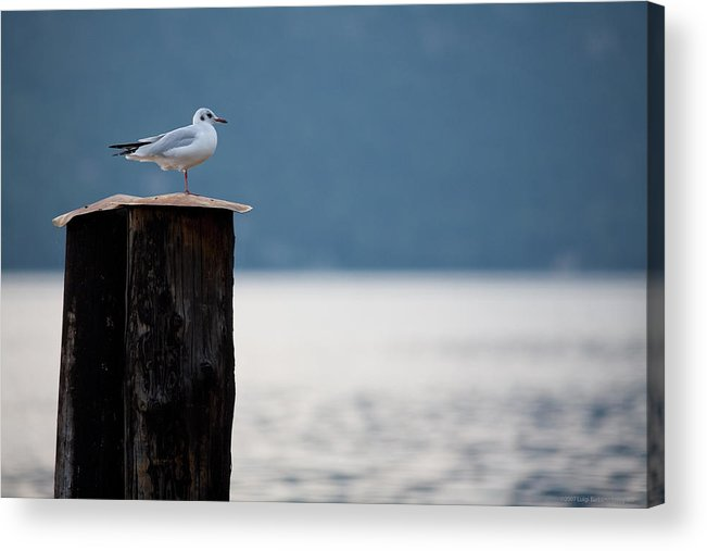 Italy Acrylic Print featuring the photograph Seagull by Luigi Barbano BARBANO LLC