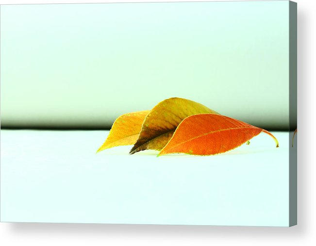 Fall Acrylic Print featuring the photograph Seasons by Mark Ross