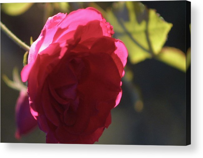 Transparent Acrylic Print featuring the photograph See Through by Mary J Hicks