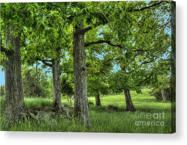 Peace Project Acrylic Print featuring the photograph Shade Trees by Pete Hellmann
