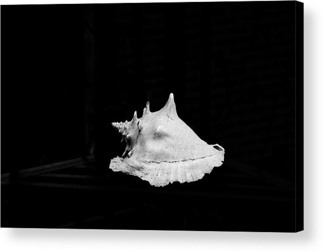 Shell Acrylic Print featuring the photograph Shell by John Toxey