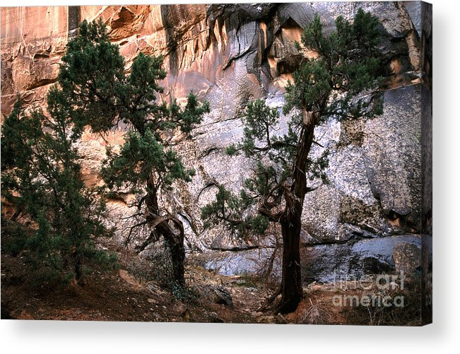 Tree Acrylic Print featuring the photograph Sheltered by Marian Kraus