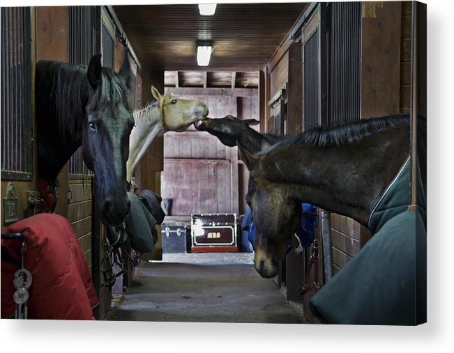 Horse Acrylic Print featuring the photograph Shenanigans by Jack Goldberg