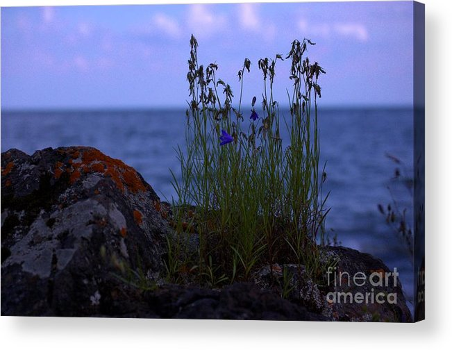 Shore Acrylic Print featuring the photograph Shoreline Beauties by The Stone Age