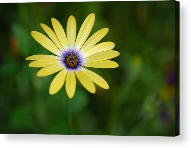 Flower Acrylic Print featuring the photograph Simple Flower by Jennifer Englehardt