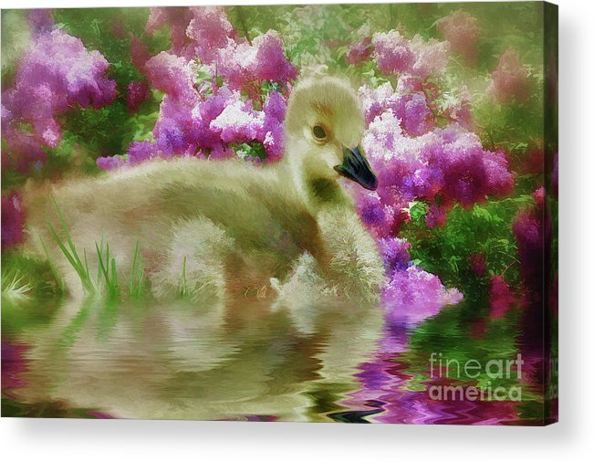 Bird Birds Acrylic Print featuring the painting Sitting Among The Lilacs by Elaine Manley