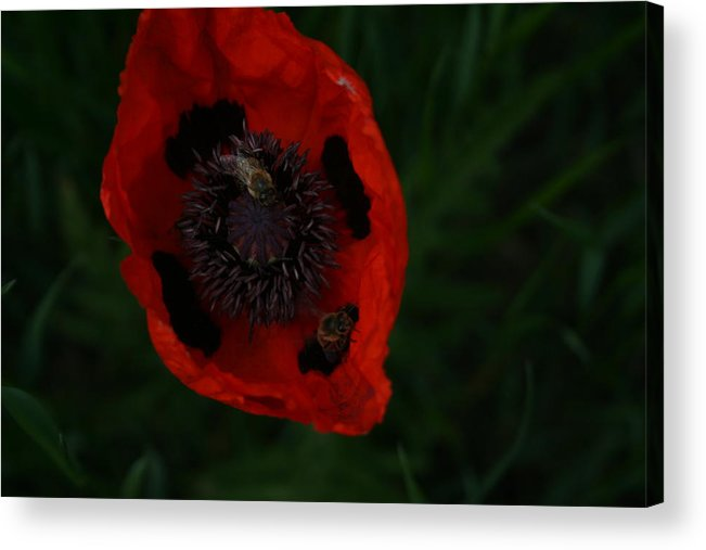 Orange Acrylic Print featuring the photograph Snacking Bees by Susan Pedrini