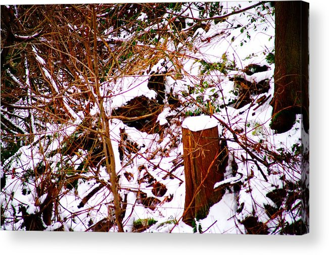 Winter Acrylic Print featuring the photograph Snow And Tree Trunk by Paul Kloschinsky