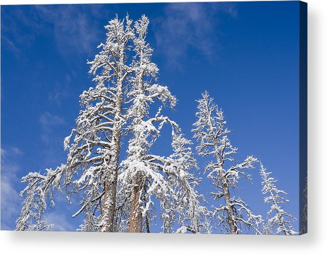 Winter Acrylic Print featuring the photograph Snow Covered by Kelley King