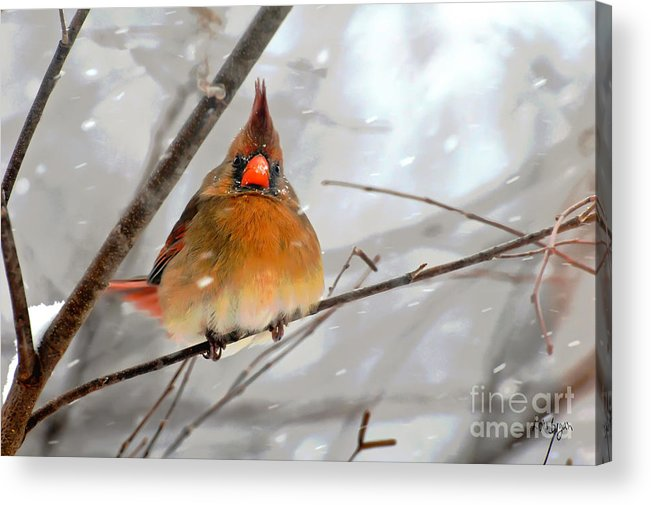 Bird Acrylic Print featuring the photograph Snow Surprise by Lois Bryan