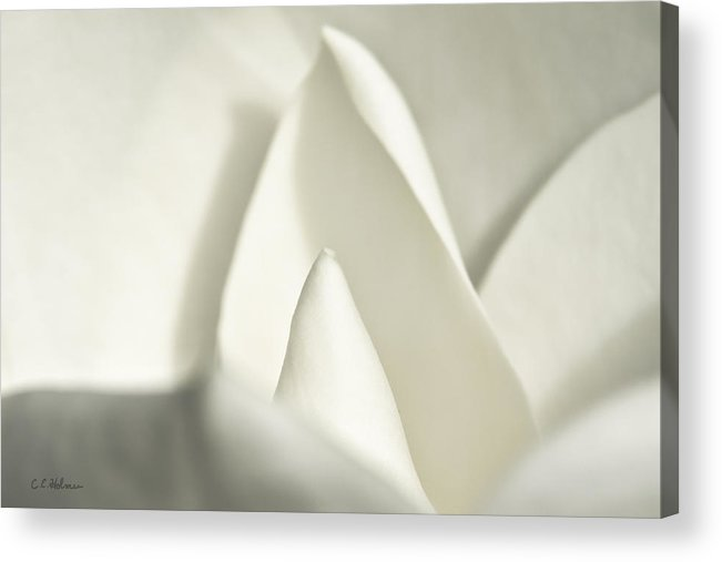 Magnolia Acrylic Print featuring the photograph Soft Magnolia by Christopher Holmes