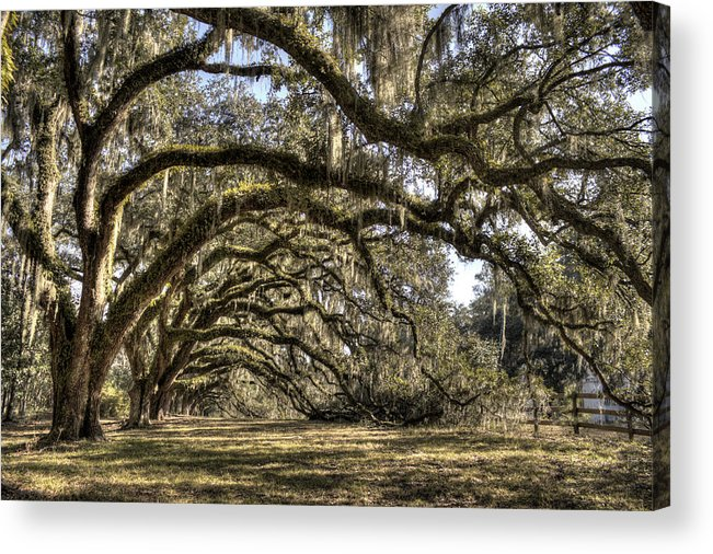 Live Oak Acrylic Print featuring the photograph Southern Live Oaks With Spanish Moss Color by Dustin K Ryan