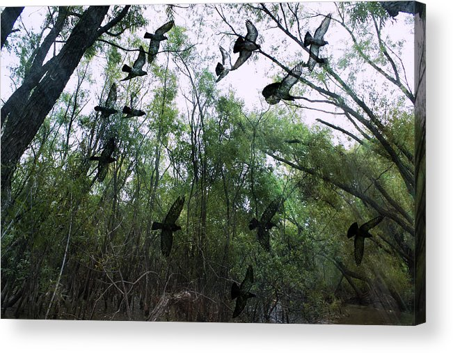 Birds Acrylic Print featuring the digital art Spirit Flight by Yvonne Emerson