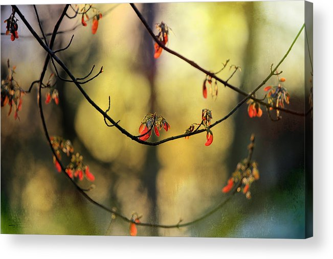 Acrylic Print featuring the photograph Spring Abstract by Theresa Campbell
