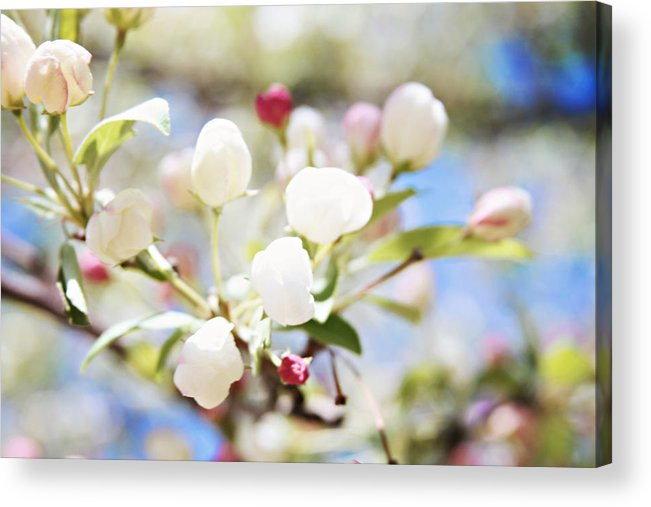 Acrylic Print featuring the photograph Spring Blooms by Sylvia Coomes