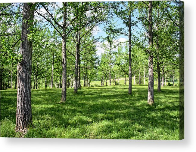 Isabela Cocoli Acrylic Print featuring the photograph Ginkgo Grove In The Spring by Isabela and Skender Cocoli